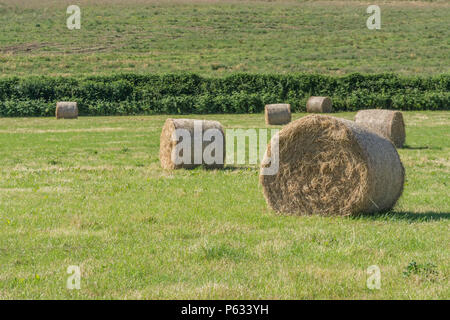 Bales of freshly baled hay in a sunlit field. - Stock Image