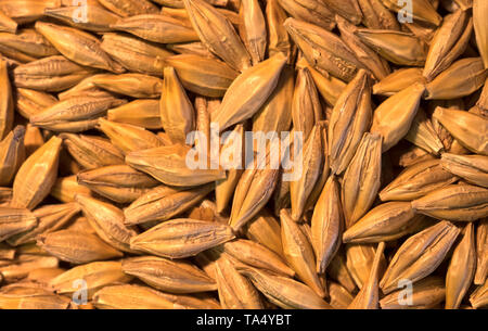 Loose dry cereal grains - Stock Image