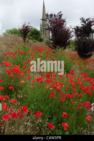 A display of poppies in an urban area with a church spire in the background - Stock Image