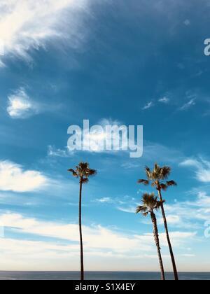 Three palm trees at the beach.  Manhattan Beach, California USA. - Stock Image