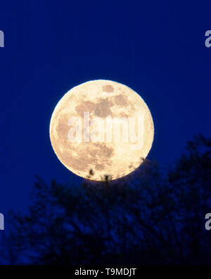 Full Flower Moon over Rocky Mountains, Salida, Colorado, USA - Stock Image