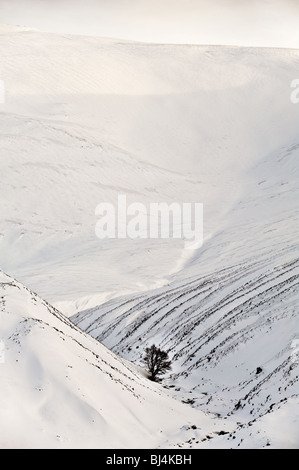 image of single tree in snowy gulley - Stock Image