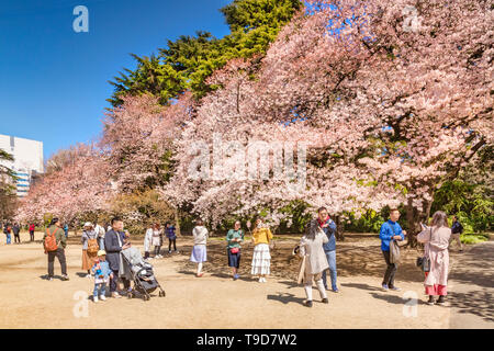 4 April 2019: Tokyo, Japan - Cherry Blossom in Shinjuku Gyoen Park in spring, with visitors taking photos and selfies. - Stock Image