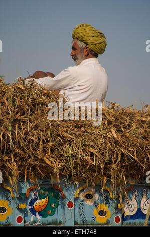 Rajasthani man in distinctive turban, Pushkar, India - Stock Image