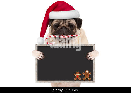 cute Christmas pug dog with santa hat and candy cane, holding up blank blackboard sign, isolated on white background - Stock Image