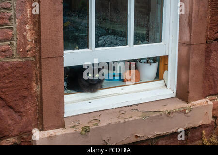 A black cat sits on a window sill and peers out through am open window. - Stock Image