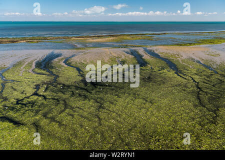the coast of the ile de re at low tide on a sunny day - Stock Image