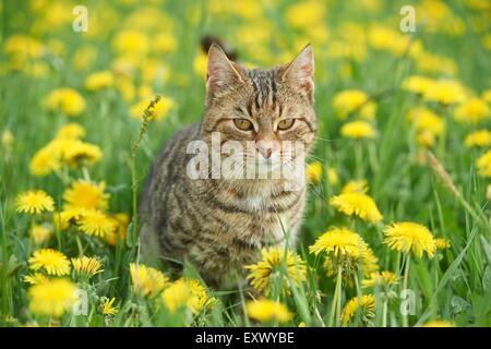 Domestic kitten on a meadow - Stock Image