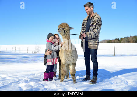 Happy family with alpaca on a field in winter - Stock Image