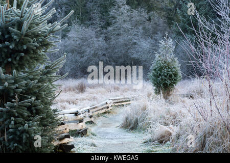 Frosty trail in Silverdale Creek Wetlands, Mission, British Columbia - Stock Image