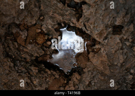 Landscape reflection in a forest puddle, Majorca, Spain - Stock Image