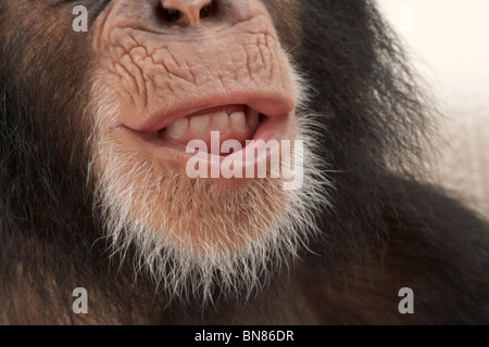 Have you heard the latest news ? - Stock Image