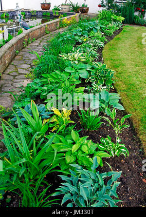 An impressive hosta border in the country cottage garden - Stock Image