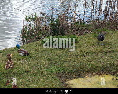 A coot (Fulica atra) with some lego model mallard ducks and ducklings by the side of a lake at LEGOLAND Windsor Resort UK - Stock Image