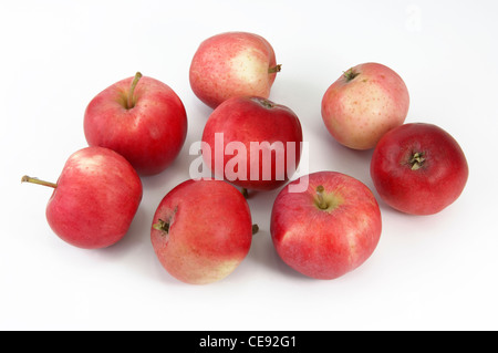 Domestic Apple (Malus domestica), variety: Peach Red Summer Apple. Several apples, studio picture against a white - Stock Image