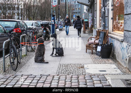 Berlin.Mitte. Two well-behaved dogs tied to bike stand wait patiently on pavement outside shop - Stock Image