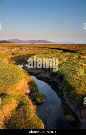 Salt Marsh, Grange over Sands looking towards Silverdale - Stock Image
