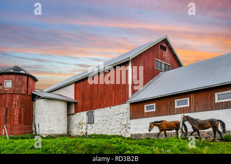 A colorful sky above a vintage barn as  horses graze on a thoroughbed horse farm in Finland - Stock Image