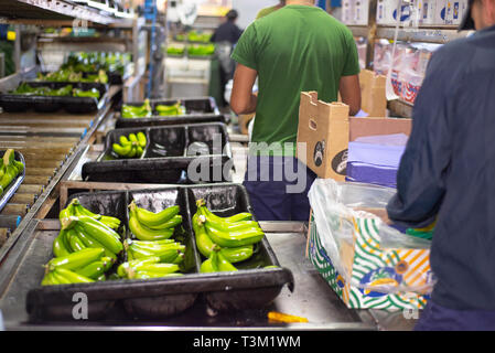 Tenerife, Spain - January 3, 2019: Automated labeling machine during operation in food packaging industry in Tenerife, Canary islands, Spain . - Stock Image