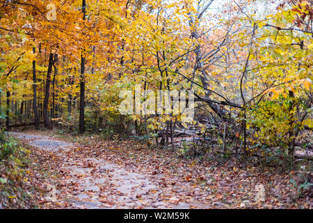 Northern Virginia yellow orange red autumn trees view in Fairfax County colorful foliage in VA on Sugarland Run Stream Valley Trail with paved road an - Stock Image