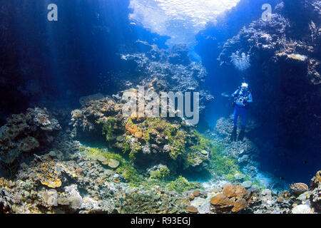 Male Scuba Diver with camera in underwater swim through with coral reef and sunbeams - Stock Image