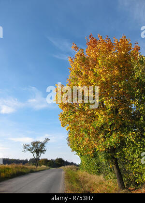 Colorful tree. Rural road in autumn nature. Amazing colored foliage on the way. Traveling by country landscape. Alley under blue sky in sunny weather. - Stock Image