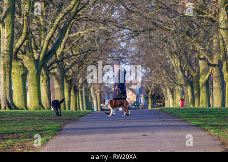 Northampton. U.K. 4th March 2019. Abington Park. A lady walking her dogs on a bright and sunny morning with the forecast for a clear bright day ahead. Credit: Keith J Smith./Alamy Live News - Stock Image