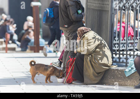An old woman sitting on a sill and feed a stray dog. Mid shot - Stock Image