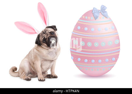 funny pug puppy dog with bunny ears diadem sitting next to big pastel pink easter egg, isolated on white background - Stock Image