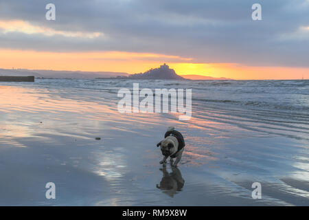 Penzance, Cornwall, UK. 14th Feb, 2019. UK Weather. It was a mild and colourful sunrise at Penzance this morning, with the temperature allready above 10 degrees C at 7.30am. Titan the Pug out for his morning run on the beach. Credit: Simon Maycock/Alamy Live News - Stock Image