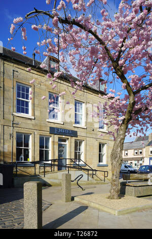 Late March, Scottish Borders, UK - cherry blossom outside a haridressing salon in Simon Square, Kelso, with access ramps at entry. - Stock Image