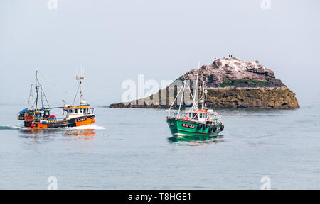 Dunbar fishing boats in calm sea  next to small rocky island with seabirds, Firth of Forth, East Lothian, Scotland, UK - Stock Image
