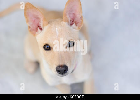 Curious dog is a cute curious dog looking funny right in your face. - Stock Image