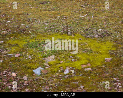 almost round patch of moss - Stock Image
