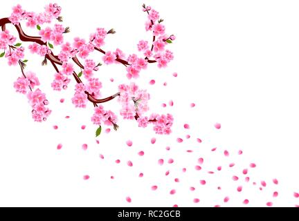 Sakura. Branches with purple flowers, leaves and cherry buds. Cherry drops petals. isolated on white background illustration - Stock Image