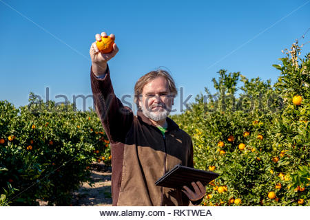 Farmer with a tablet shows an orange in his field of cultivation - Stock Image
