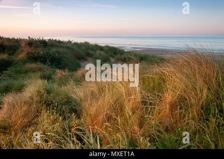 Looking over the golden grass on a sand dune at a calm sea in the South of England - Stock Image
