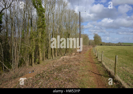 Electricity poles following cutback of trees which had become overgrown causing a hazard near the north Oxforshire - Stock Image
