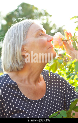 Woman with gray hair in her garden enjoying the perfume of a rose flower on the glorious light of a warm and sunny - Stock Image