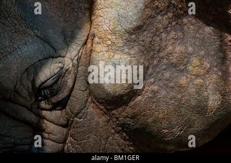 Rhino very close - Stock Image