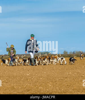 The East Lincs (Lincolnshire) Basset Hounds - The Huntsman, with a young helper and the pack of hounds away for the day hunting crossing a ploughed field - Stock Image