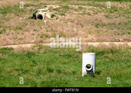 A black bear emerges from his den fashioned from pipes and a buried shipping container at The Wild Animal Sanctuary - Stock Image