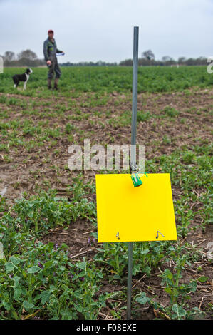 A pollen beetle trap set in a field of oilseed rape (canola), for a research project. The farmer and his dog in - Stock Image