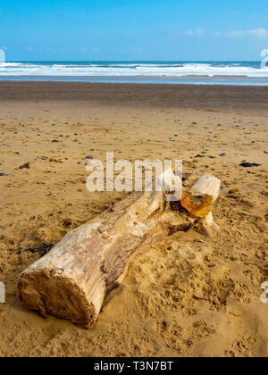 A large piece of driftwood, part of a tree lying on a wide sandy beach on the North Yorkshire Coast - Stock Image