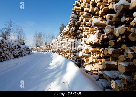 Piles of  pine ( pinus sylvestris ) logs at logging road , Finland - Stock Image