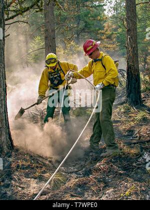 Wildland firefighters extinguishing burning underbrush. Big Creek Fire near Victor, Montana. July, 2003. - Stock Image