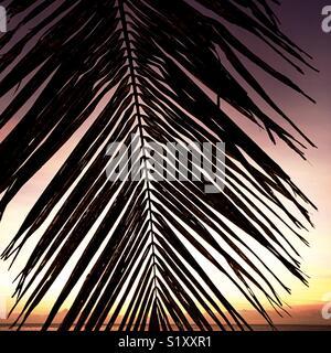 A palm fond (leaf) and the sunset. Tavarua, Fiji. - Stock Image