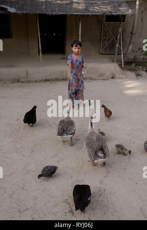 BANGLADESH Girl of the Garo tribal minority feeding the chickens and geese on her farm, Haluaghat, Mymensingh region photo by Sean Sprague - Stock Image