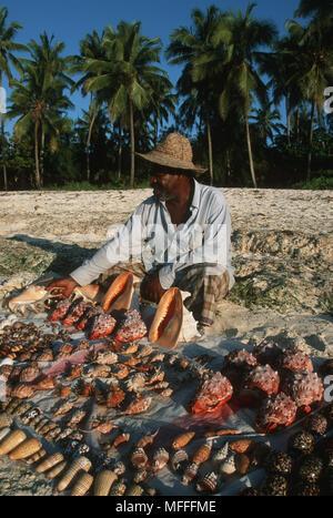 SEA SHELLS for sale on beach Zanzibar Island, Tanzania. - Stock Image