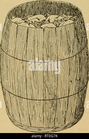 . The business hen (a new brood). Poultry. Fig. 42. DRESSED BROILERS. than a barrel in bulk is prefer- able. In very heavy packages there is some bruising from rough handling by freight or ex- press men, who seem to think that a heavy box is an invita- tion to them to do their worst. Various rules for packing have been given, such as putting them all one way, all breasts up, etc., but it is not' always convenient to do this with long-geared turkeys, and about all that can be done is to fit them into boxes or barrels in what- ever way they will fill up the space so as not to shake about. Some p - Stock Image